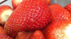 角島イチゴ