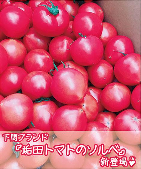 垢田トマトのソルベ